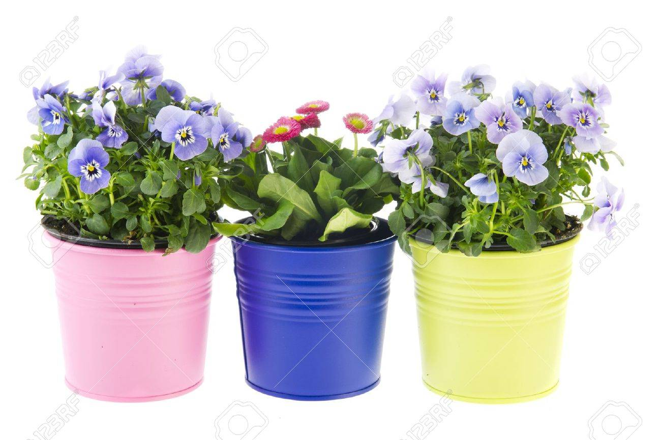 colorful garden plants in flower pots on white background stock photo 9357322