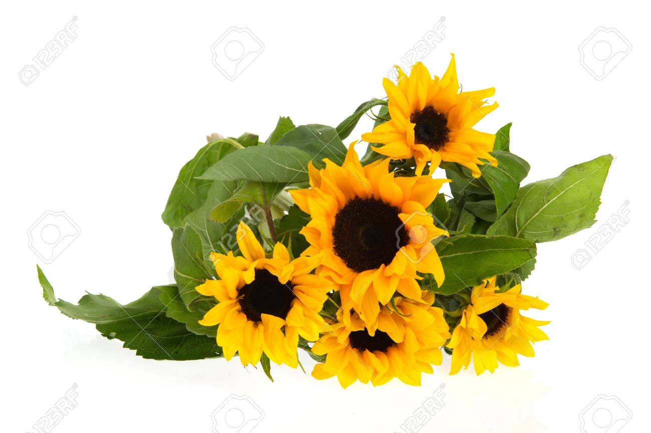 Bouquet yellow nature sunflowers  isolated over white Stock Photo - 9593691