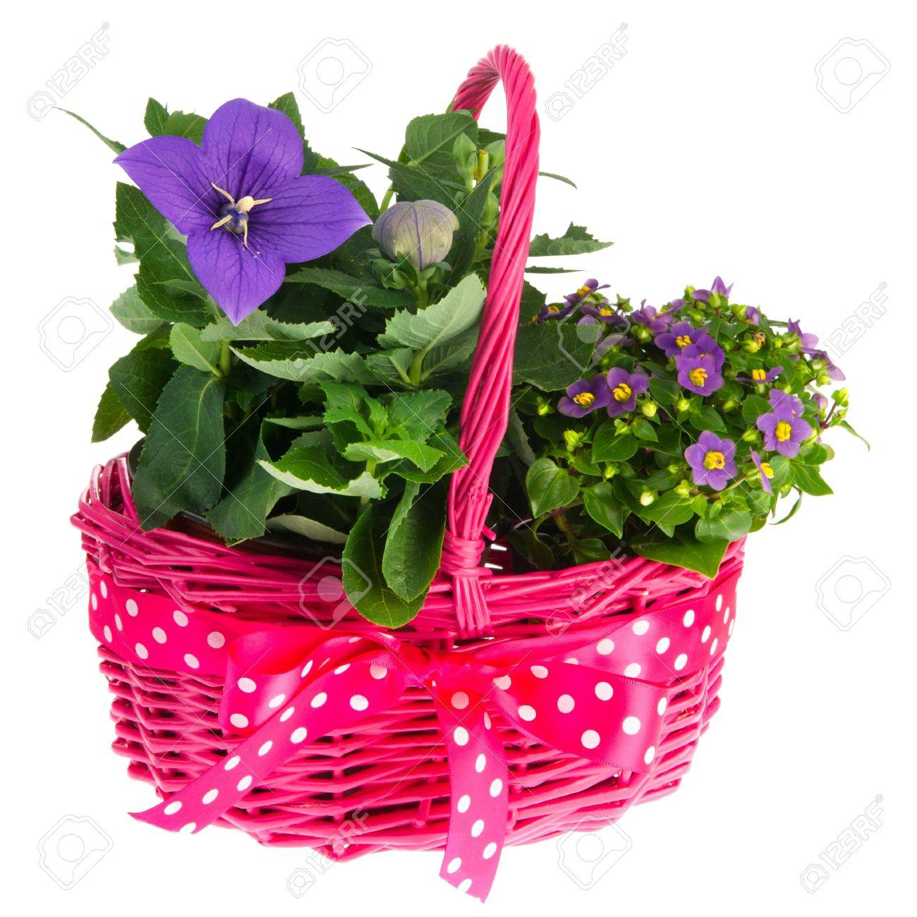 Pink Basket With Ribbon And Plants With Blue Flowers Stock Photo