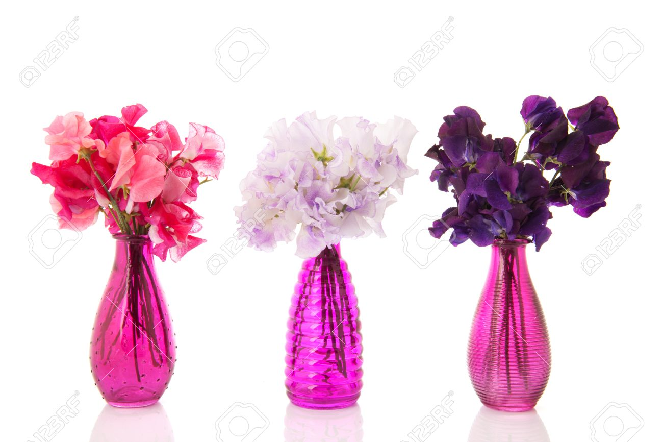 lathyrus ramos de flores coloridas en jarrones de cristal de color rosa foto de archivo