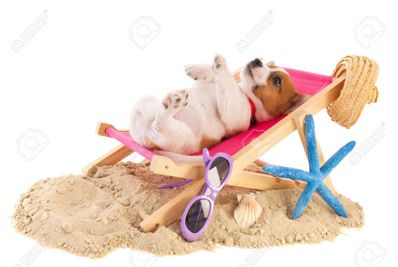 Little Cute Beach Puppy Resting In Chair Stock Photo   18501941