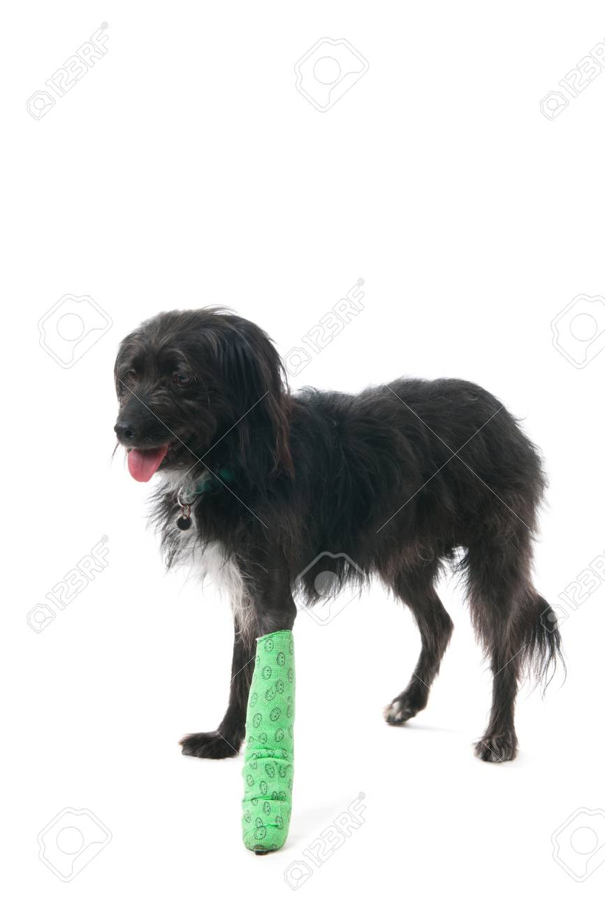 Bein gips hund gebrochen Welpe hat