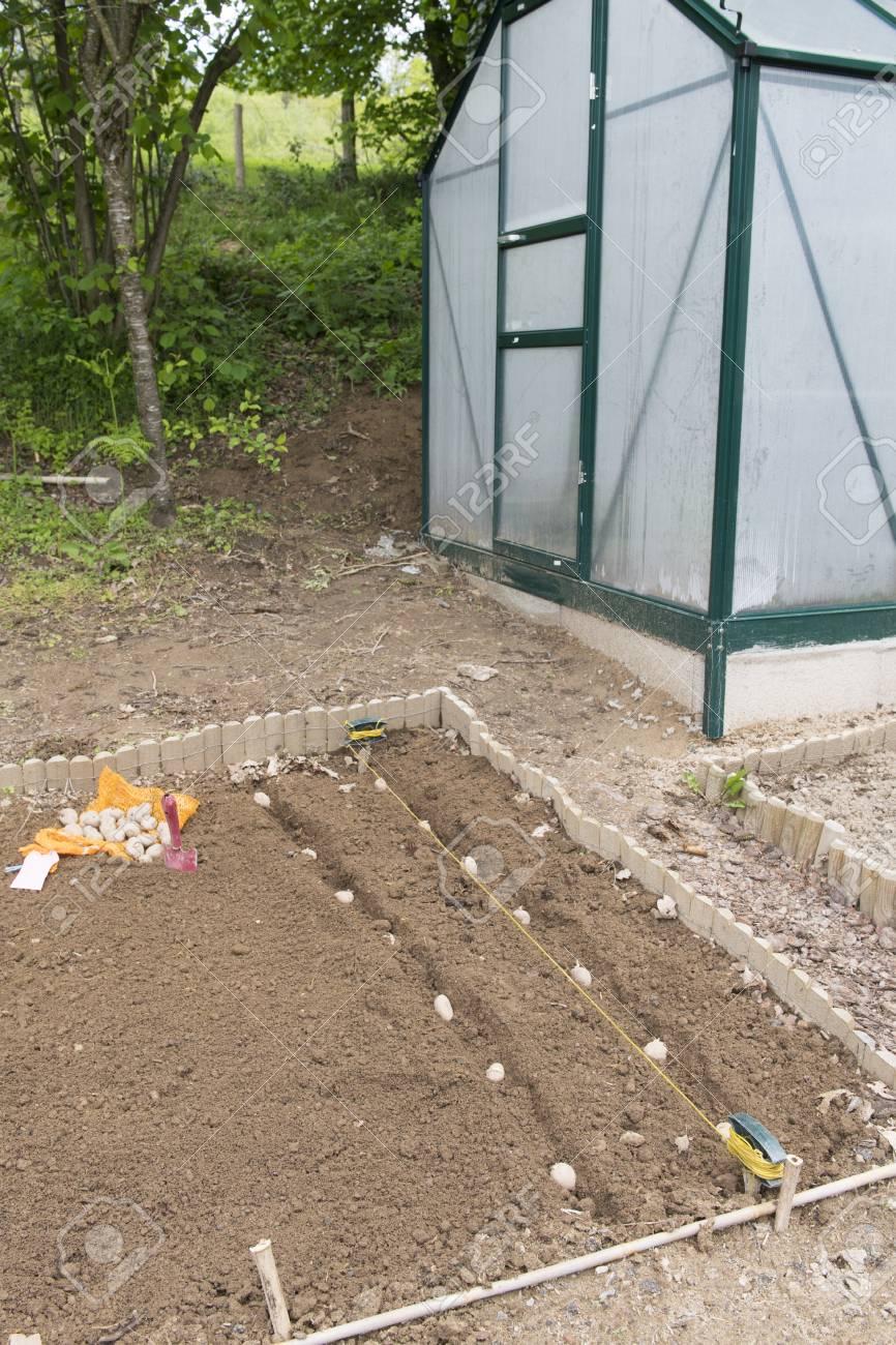 Planting Potatoes In Vegetable Garden With Gardening Tools Stock