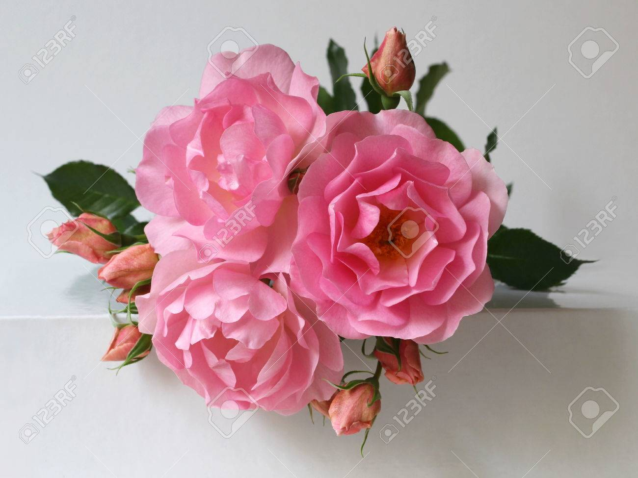 Pink Roses On A White Background Bunch Of Blooming Flowers Stock