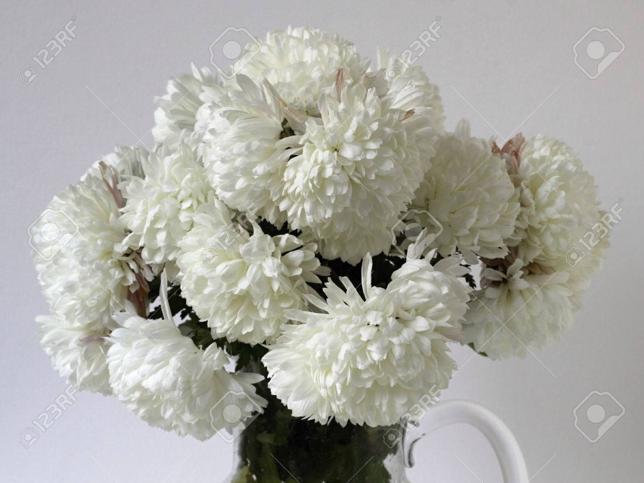 White Chrysanthemum Bunch Of Blooming Flowers Autumn Floral