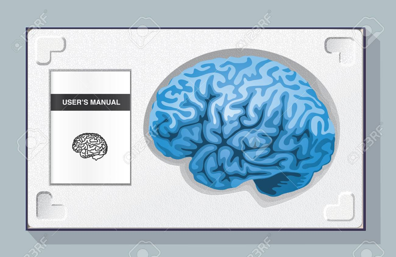 Box containing a brain and its user manual in a polystyrene packaging - 27772682