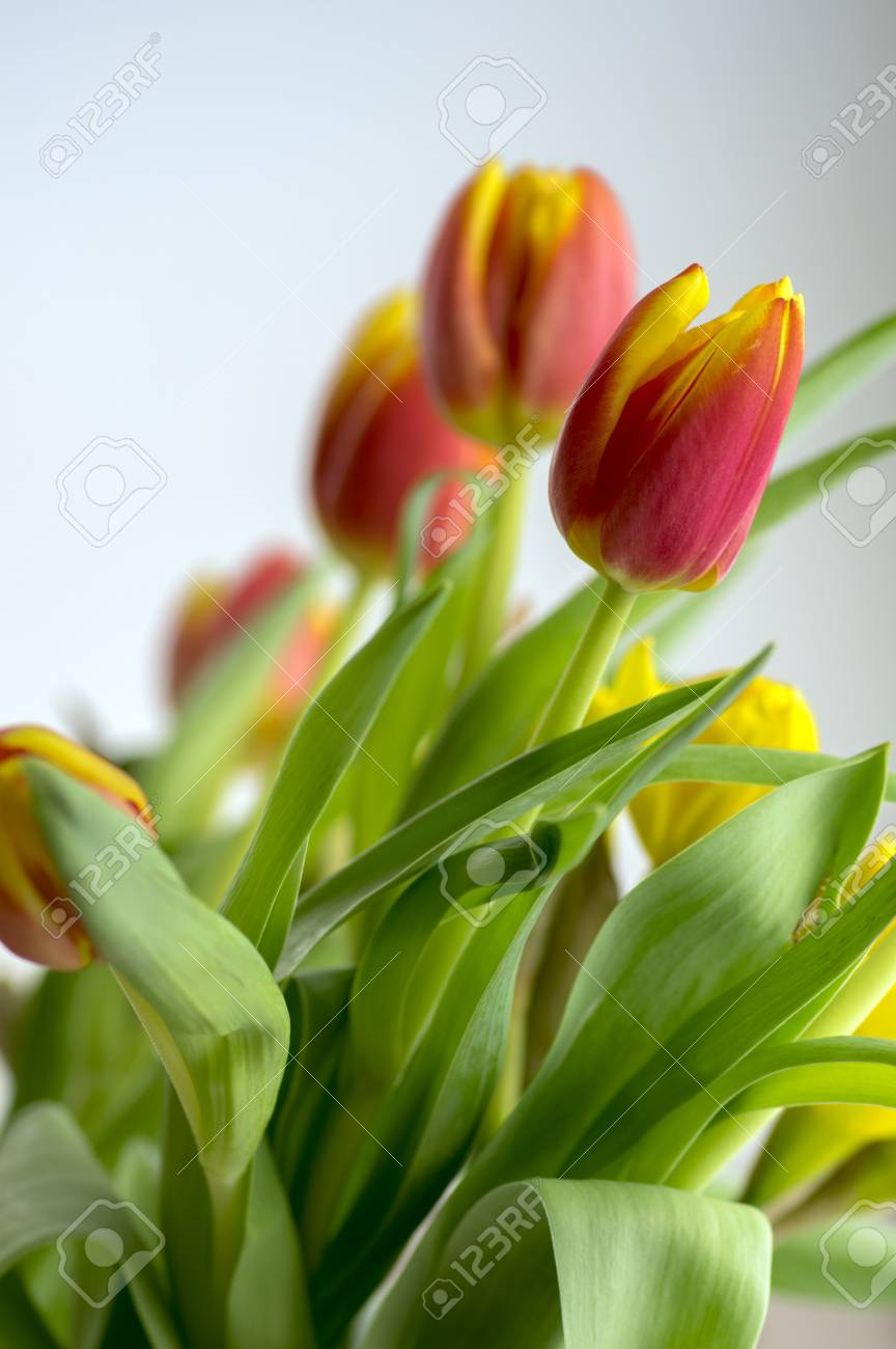 Detail Of Tulip Bouquet Ornamental Spring Flowers Yellow Red