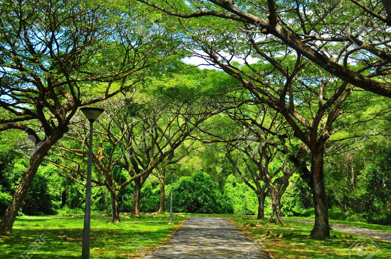 Peaceful and serene walkway at Pasir Ris Park, located at the east of Singapore - 10278120