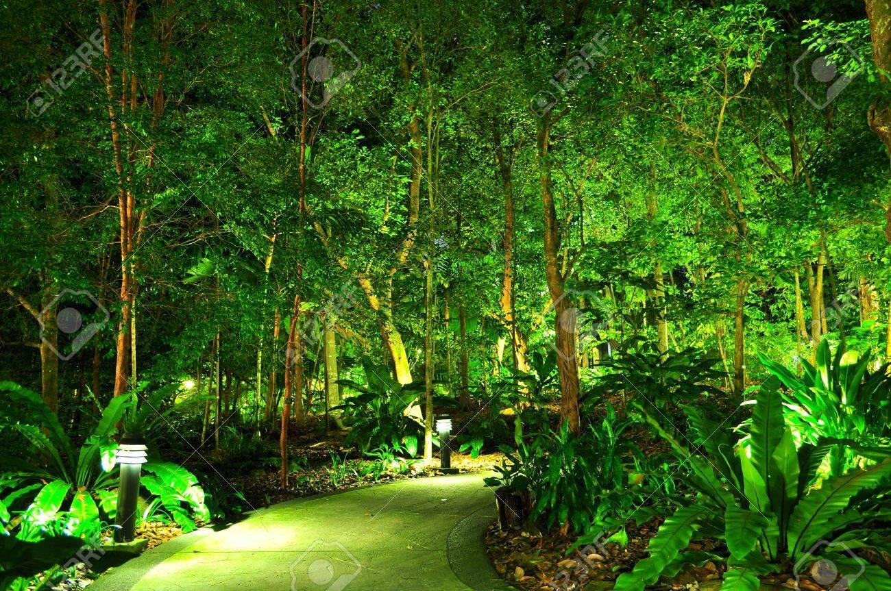 Une Allée Entourée D\'arbres Illuminés à Singapour Jardin Botanique ...