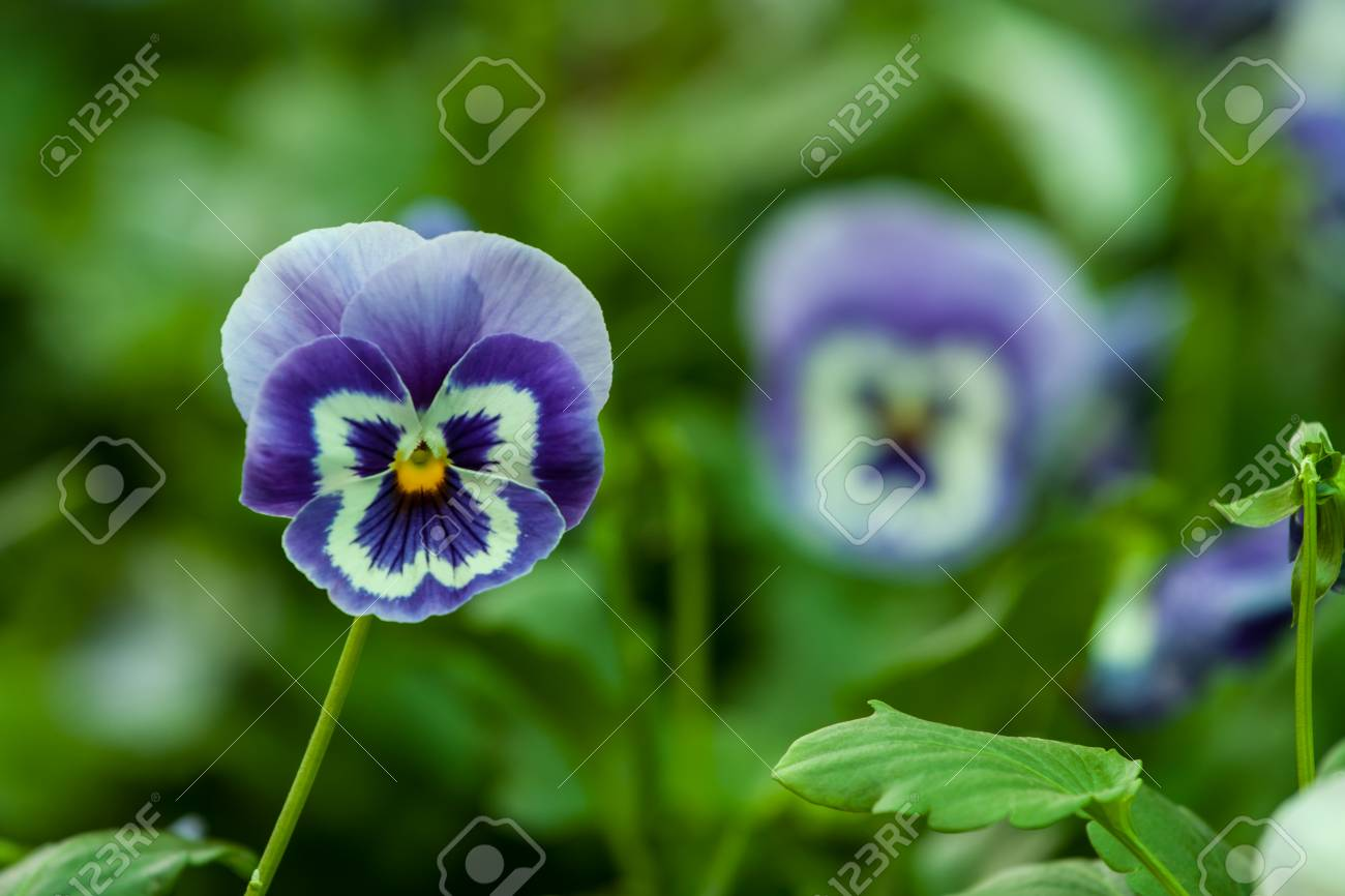 Nature Creates Beautiful Things Create Many Flowers Including