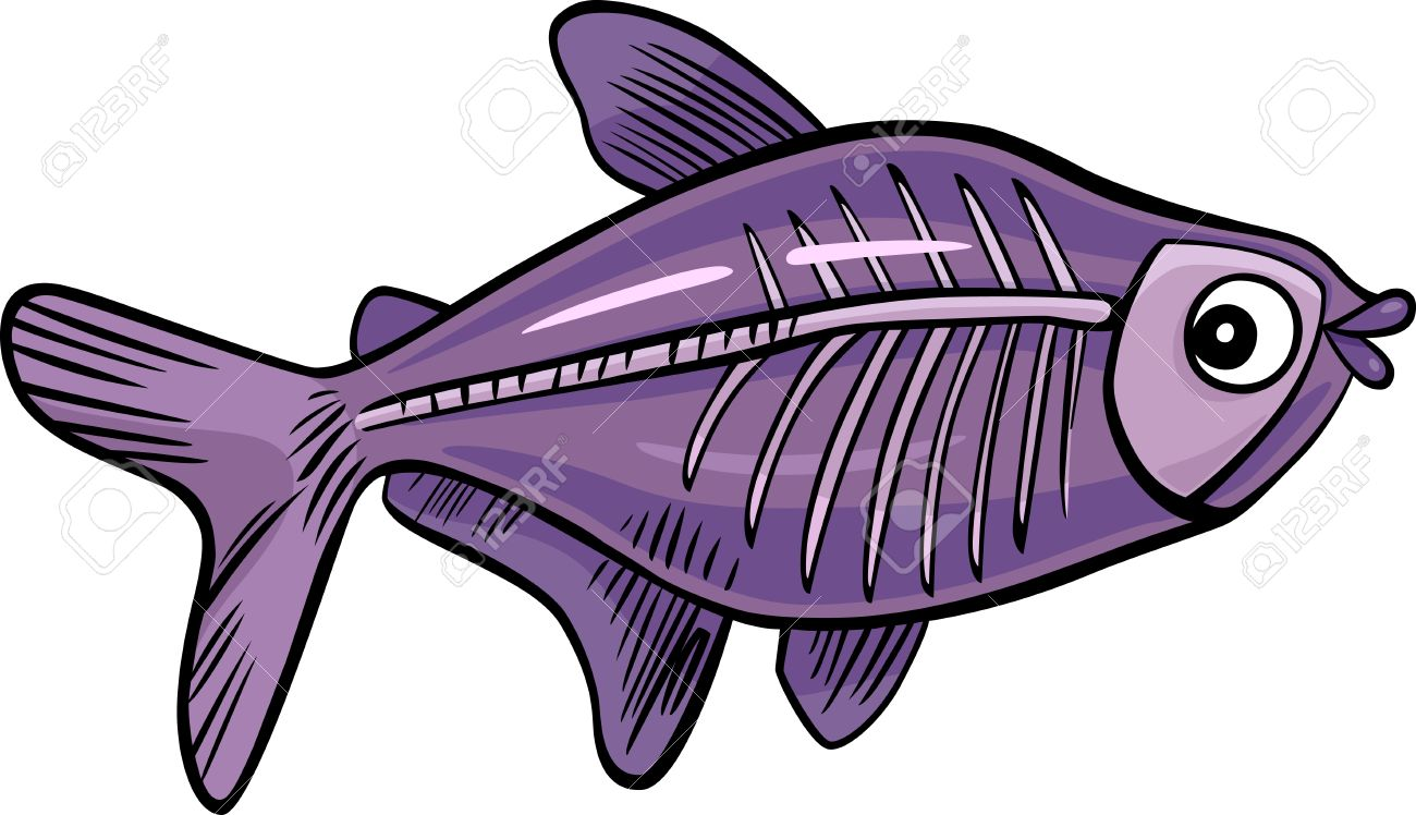 Cartoon Illustration Of X ray Fish Royalty Free Cliparts Vectors