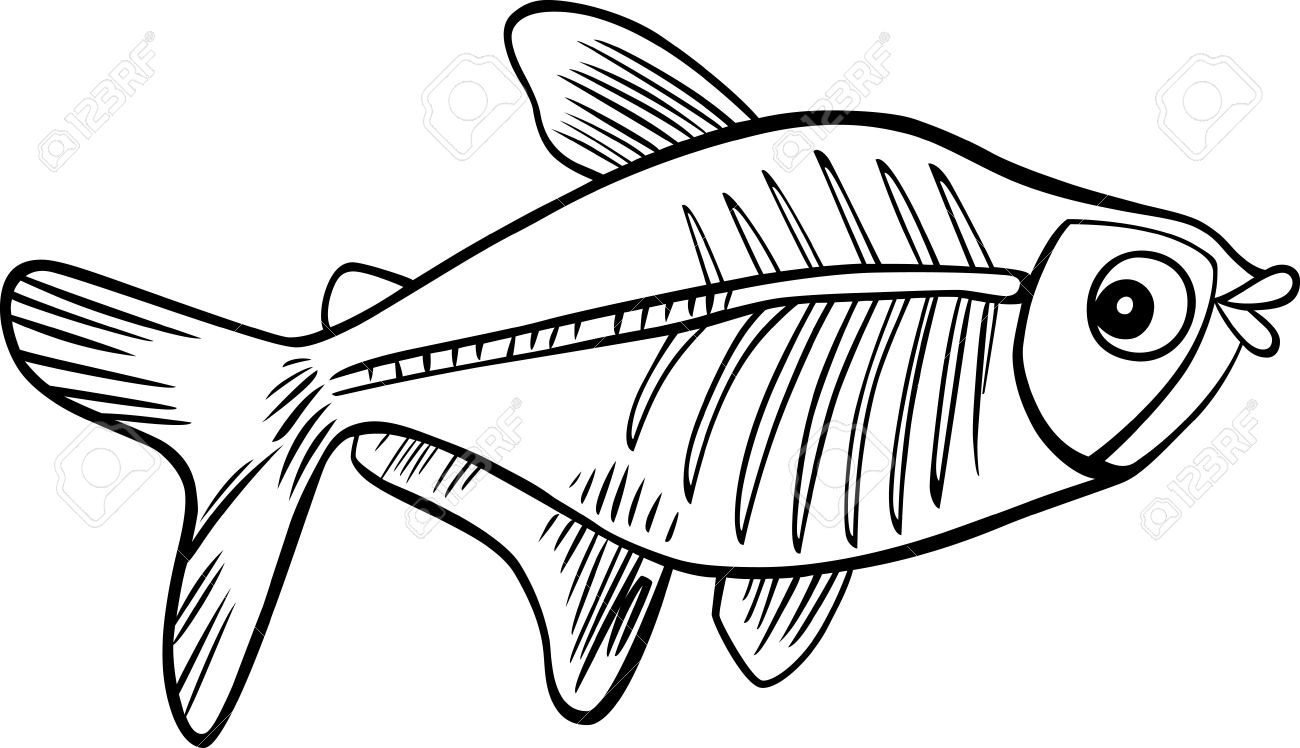 Cartoon Illustration Of X Ray Fish For Coloring Book Stock Vector