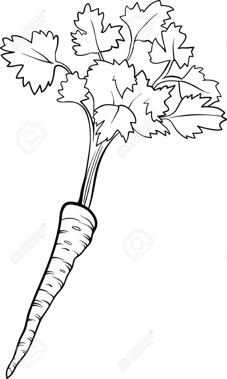 Black And White Cartoon Illustration Of Parsley Root Vegetable ...