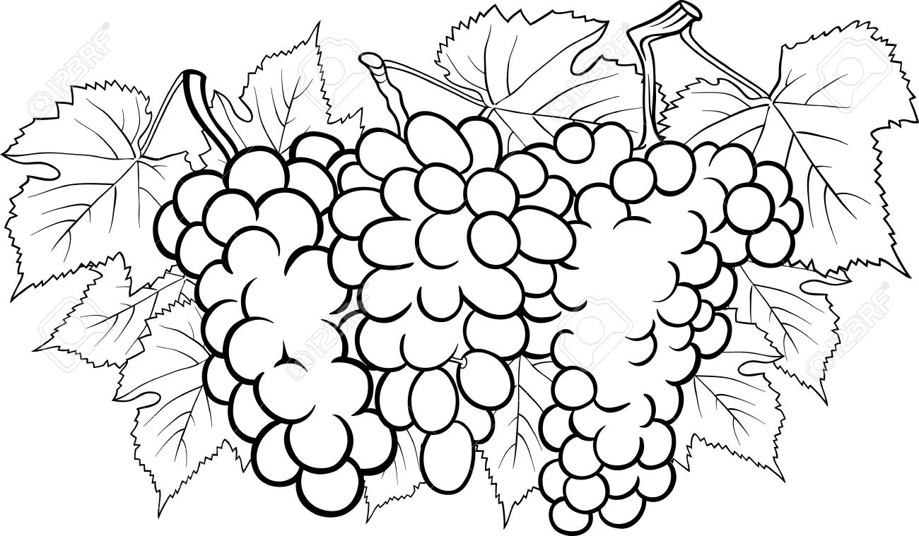 Black And White Cartoon Illustration Of Three Bunches Of Grapes ...