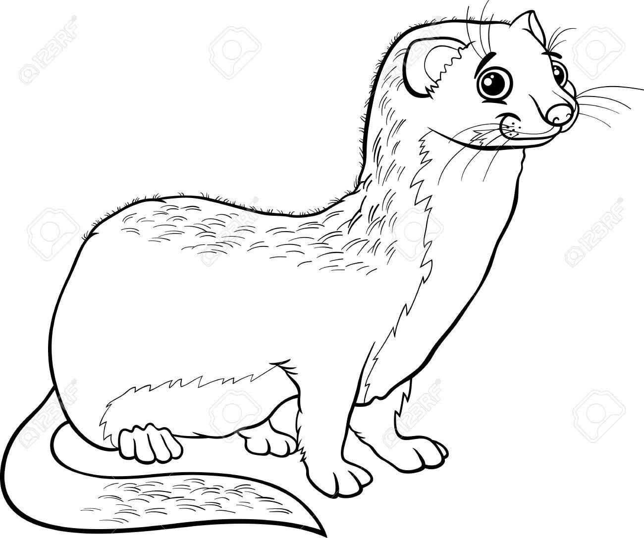 かわいいイタチ動物の塗り絵の黒と白の漫画イラストのイラスト素材
