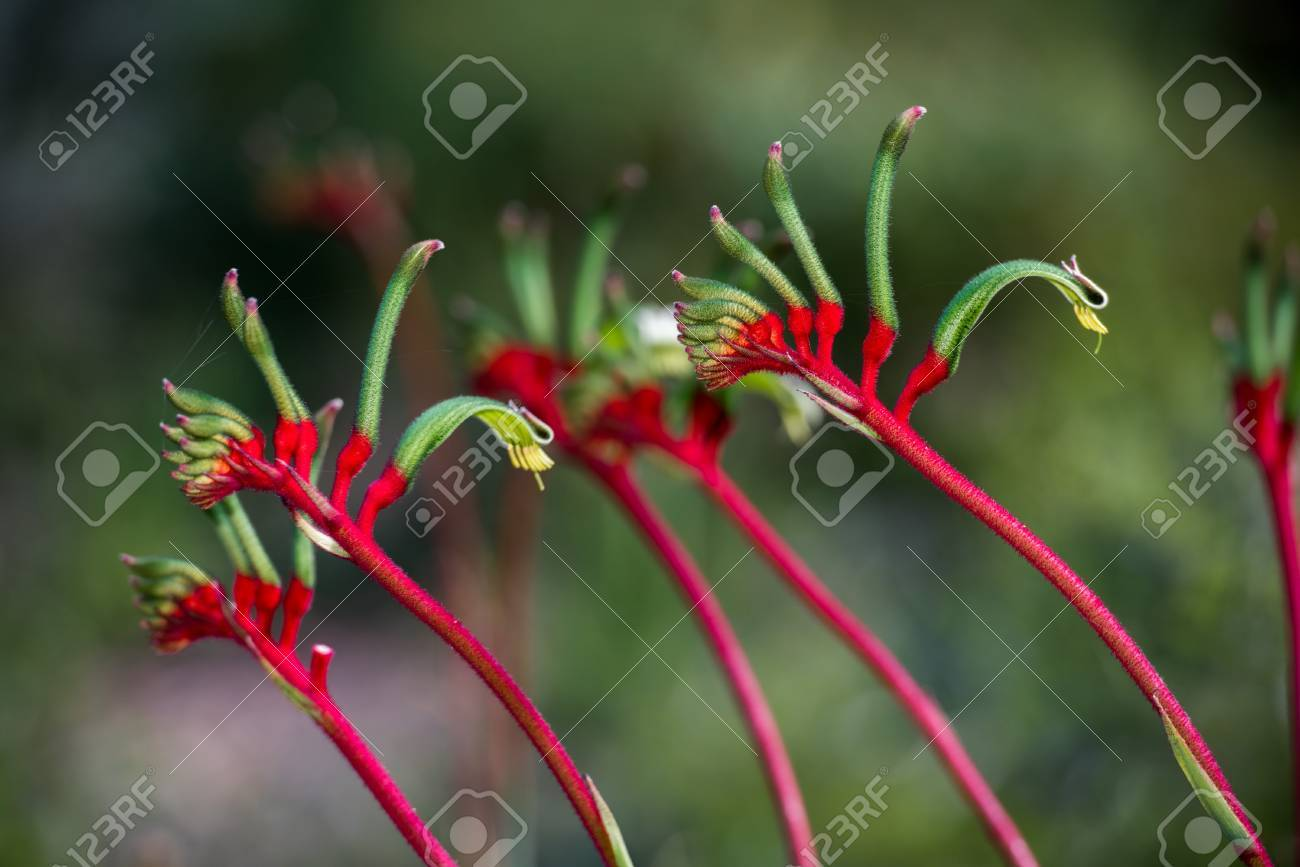 Wildflower Stock Photos. Royalty Free Wildflower Images