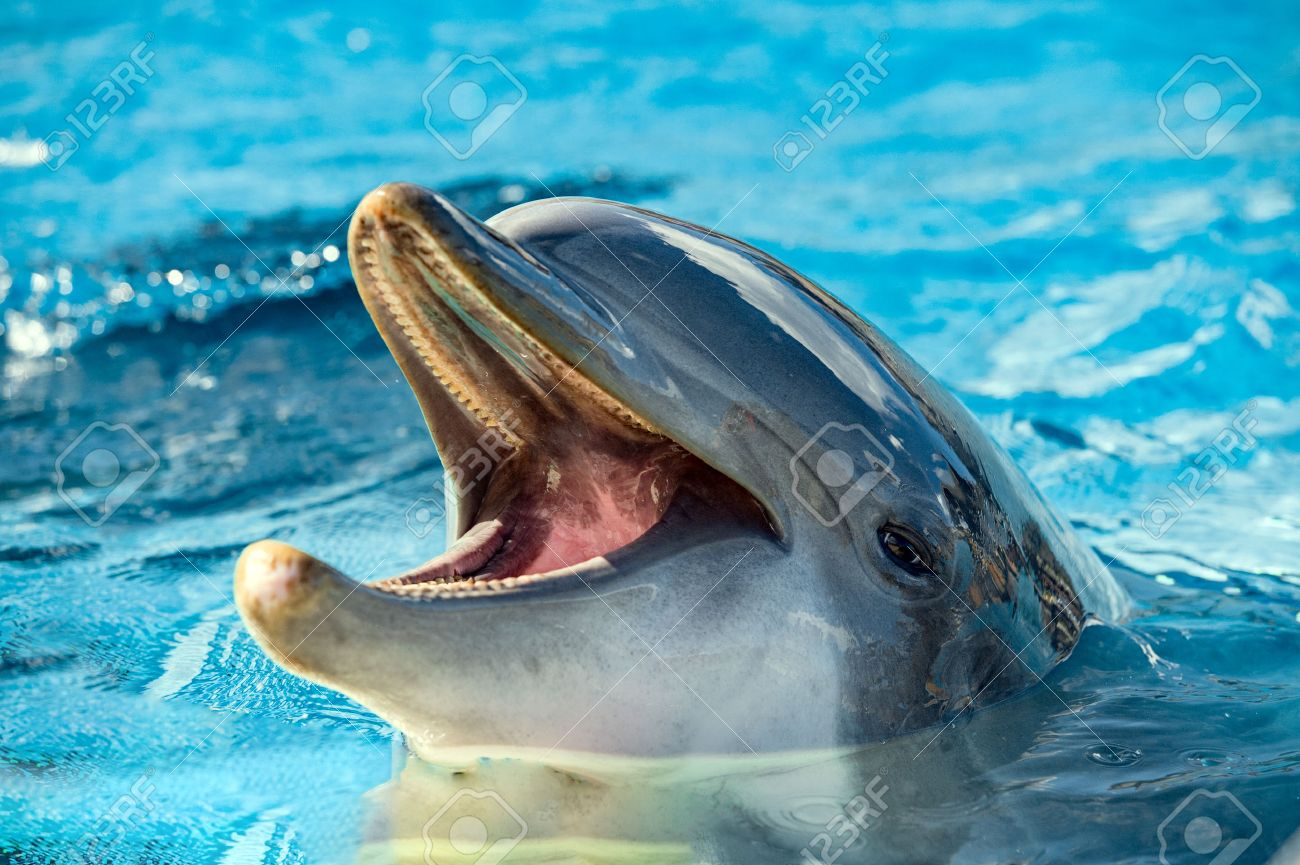 Common dolphin portrait while looking at you with open mouth - 49853803