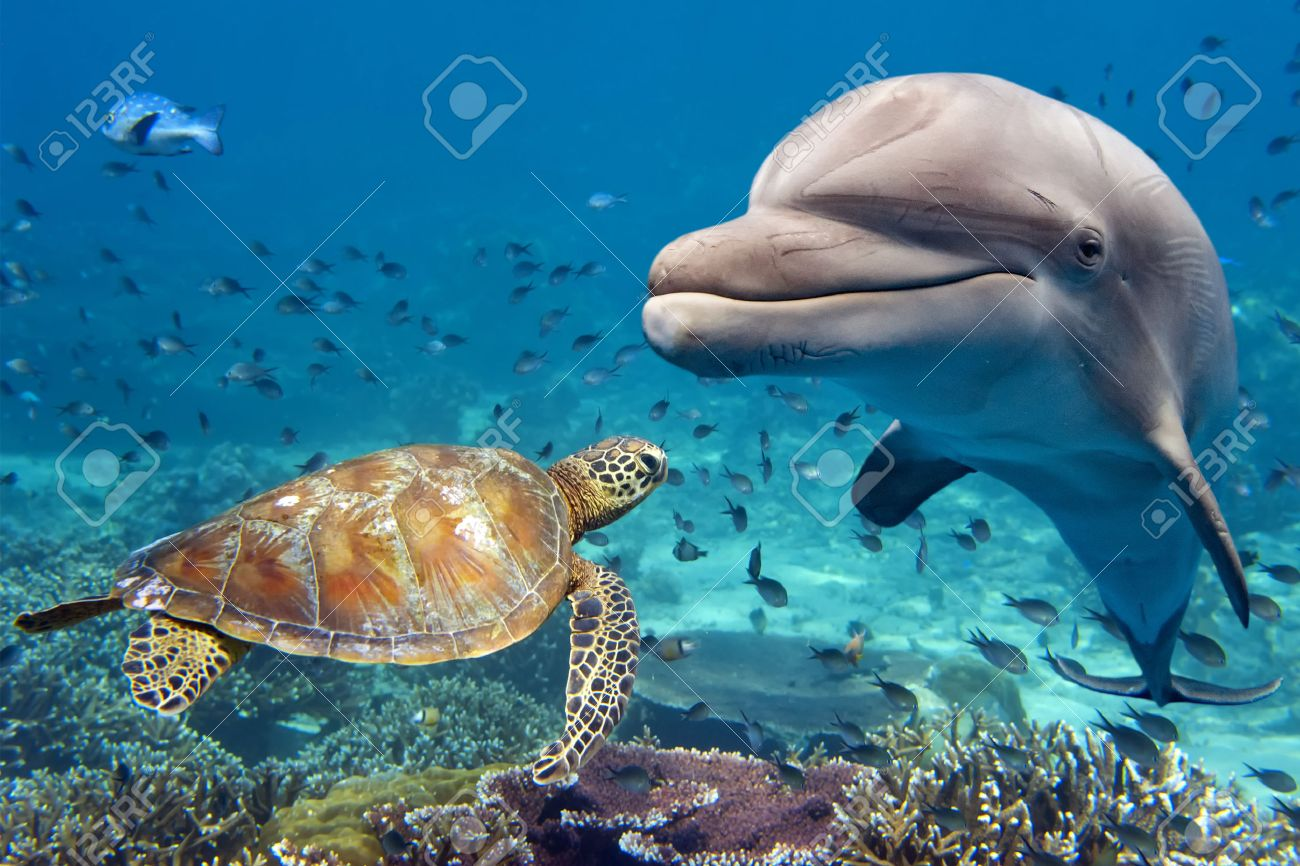 dolphin and turtle underwater on reef background looking at you - 52252522
