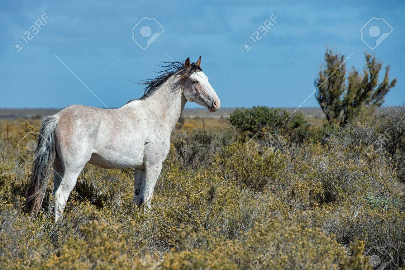 White Wild Horse On Blue Sky Background In Patagonia Argentina Stock Photo Picture And Royalty Free Image Image 55649962