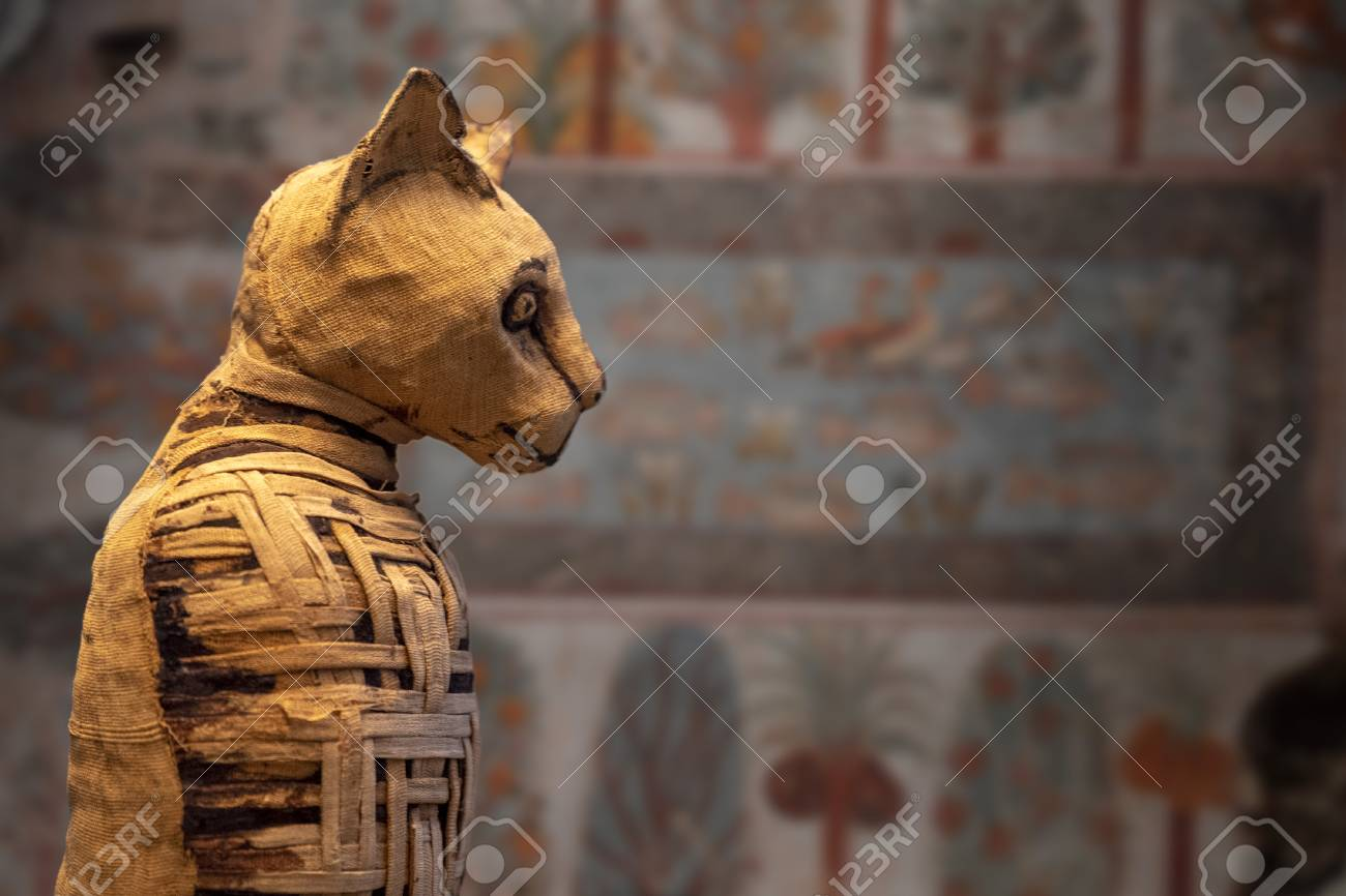 old egyptian mummy cat close up detail - 114279238