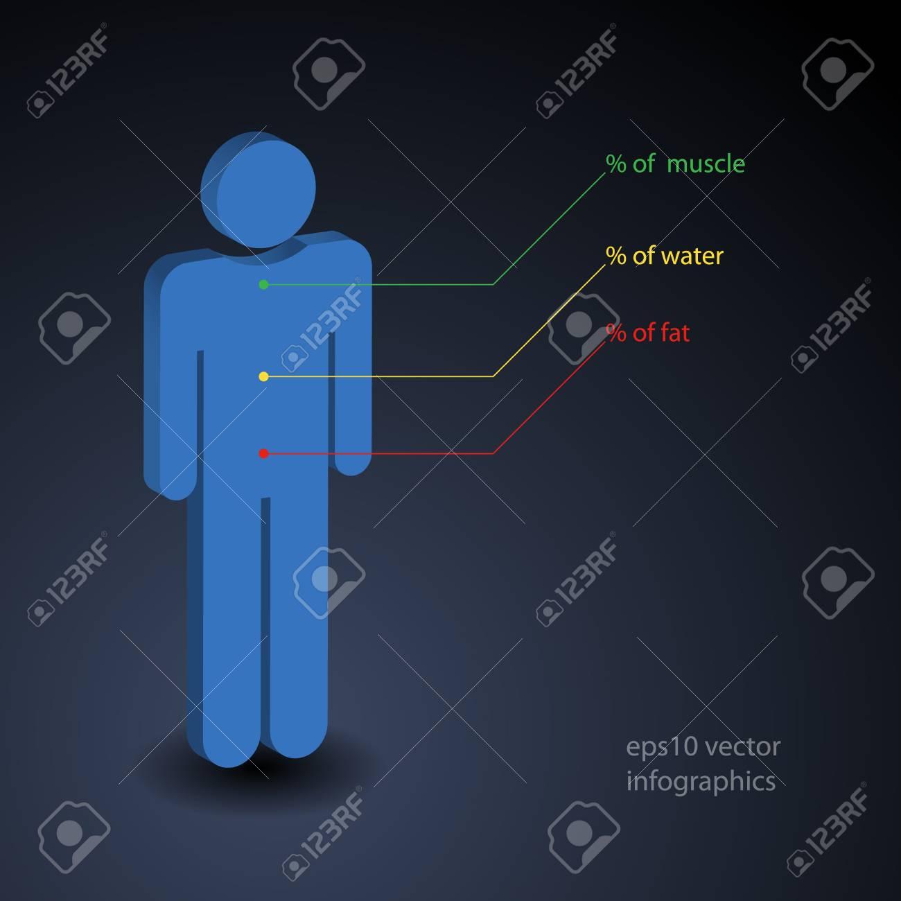 Infografía Simple Sobre Porcentaje De Músculo, El Agua Y La Grasa En ...