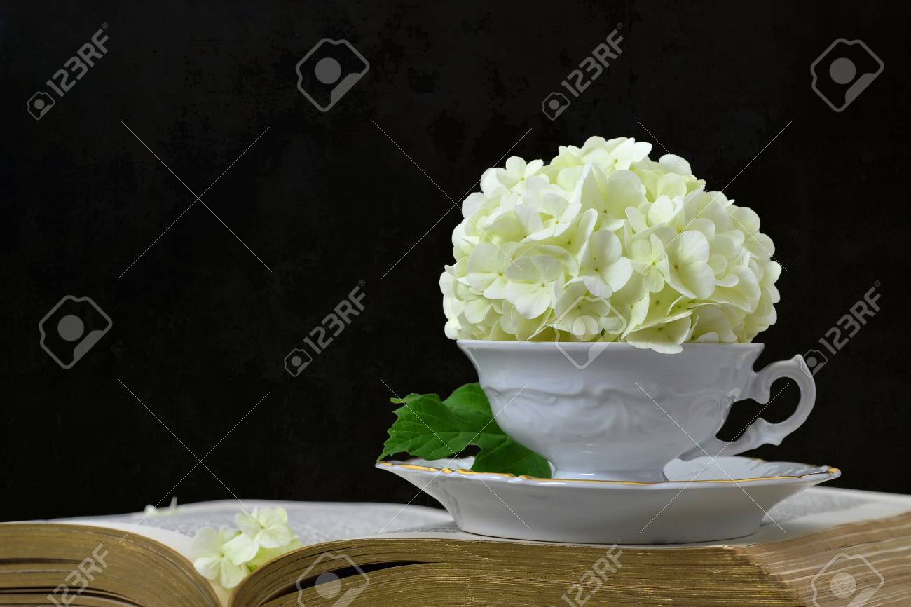 White Hydrangea Flowers On Open Book Stock Photo Picture And
