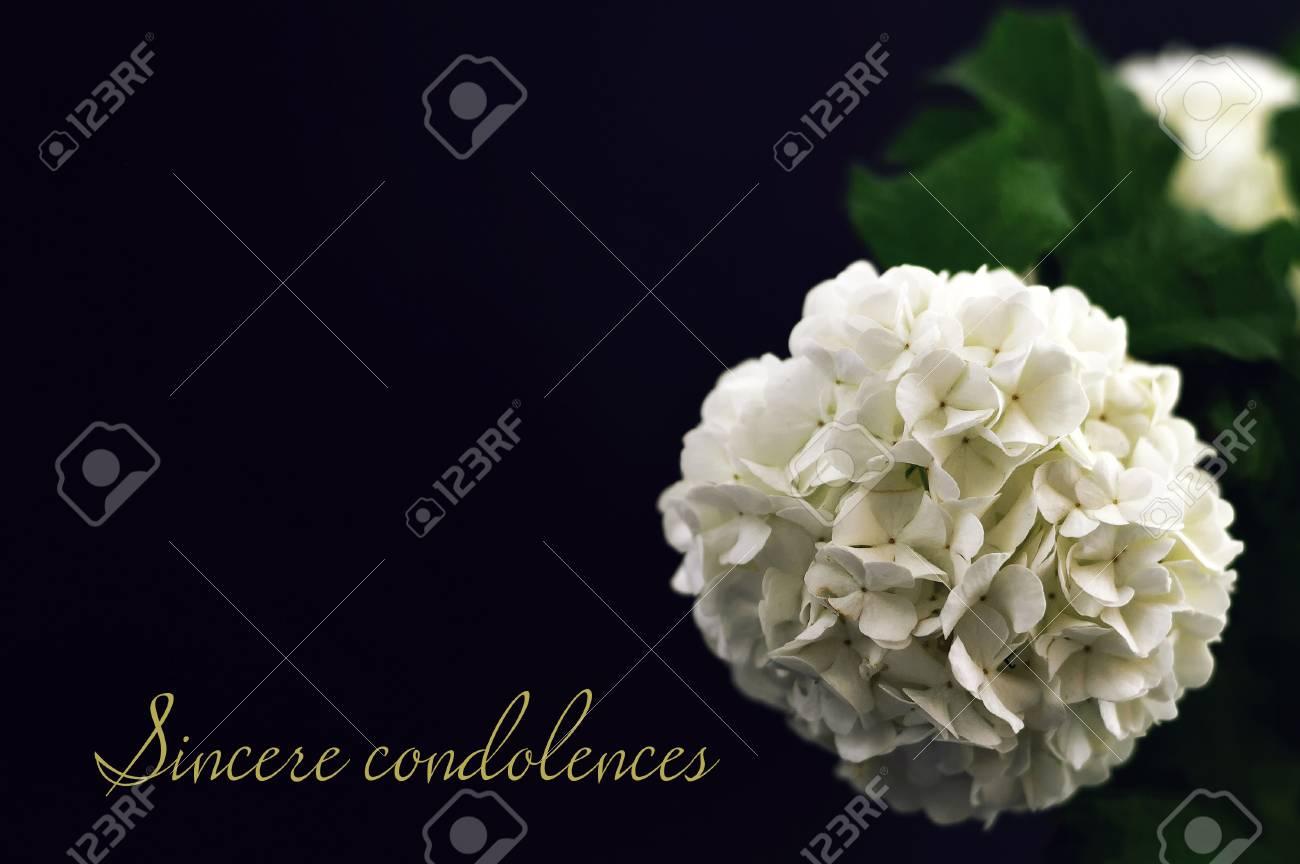 sincere condolences condolence card stock photo picture and