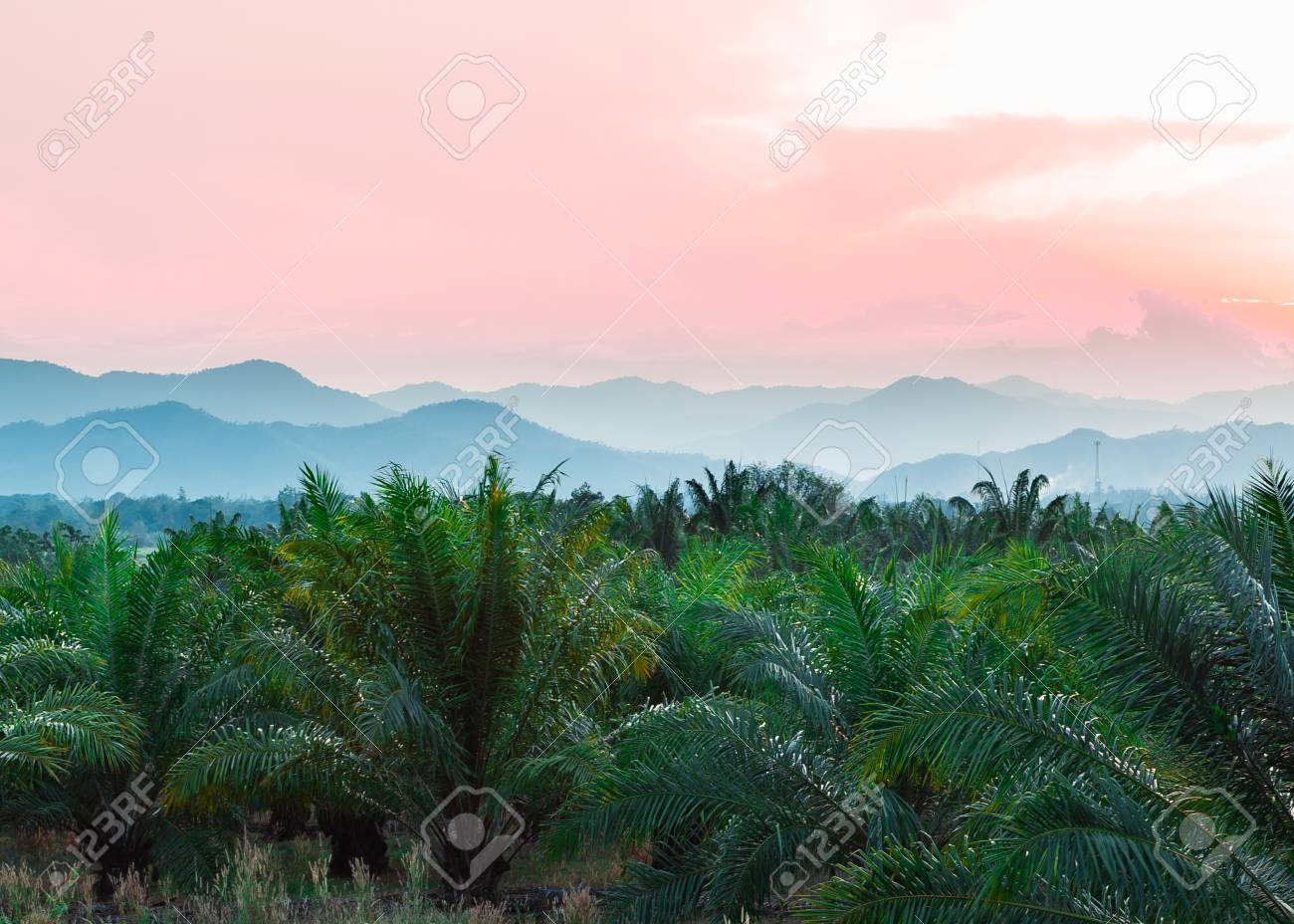 Tropical background of palm trees against mountain and twilight sky. - 105338141
