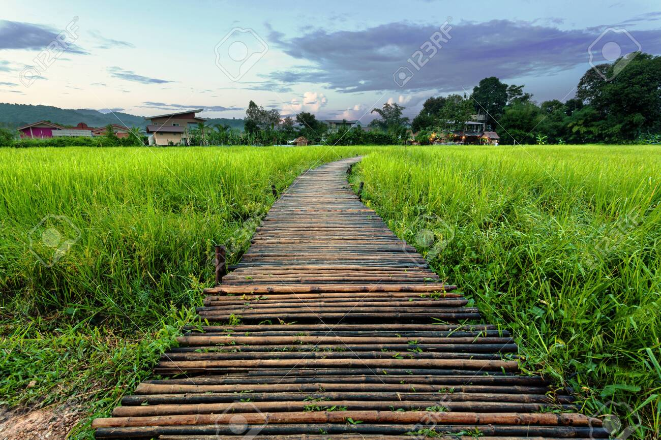 Old brown wooden bridge beside green rice field in the evening/morning at Nakornnayok, Thailand - 132521142