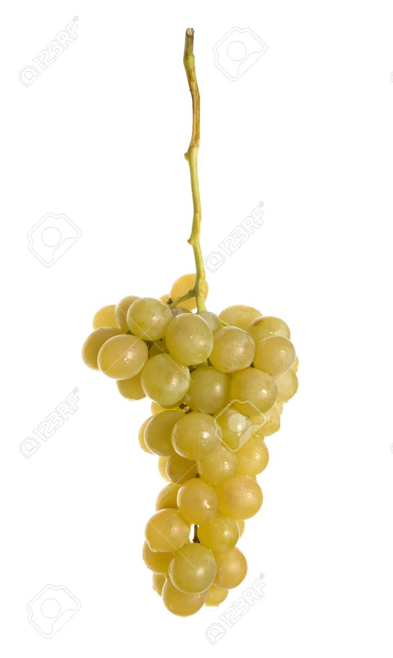 Fresh bunch of grapes with dewdrops Stock Photo - 2067758