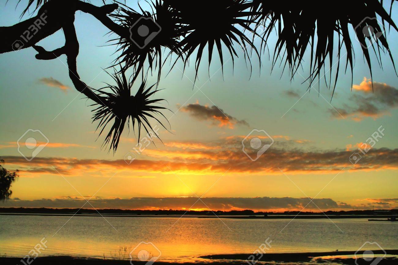Bent pandanus tree framed against early morning daybreak. Stock Photo - 5184100