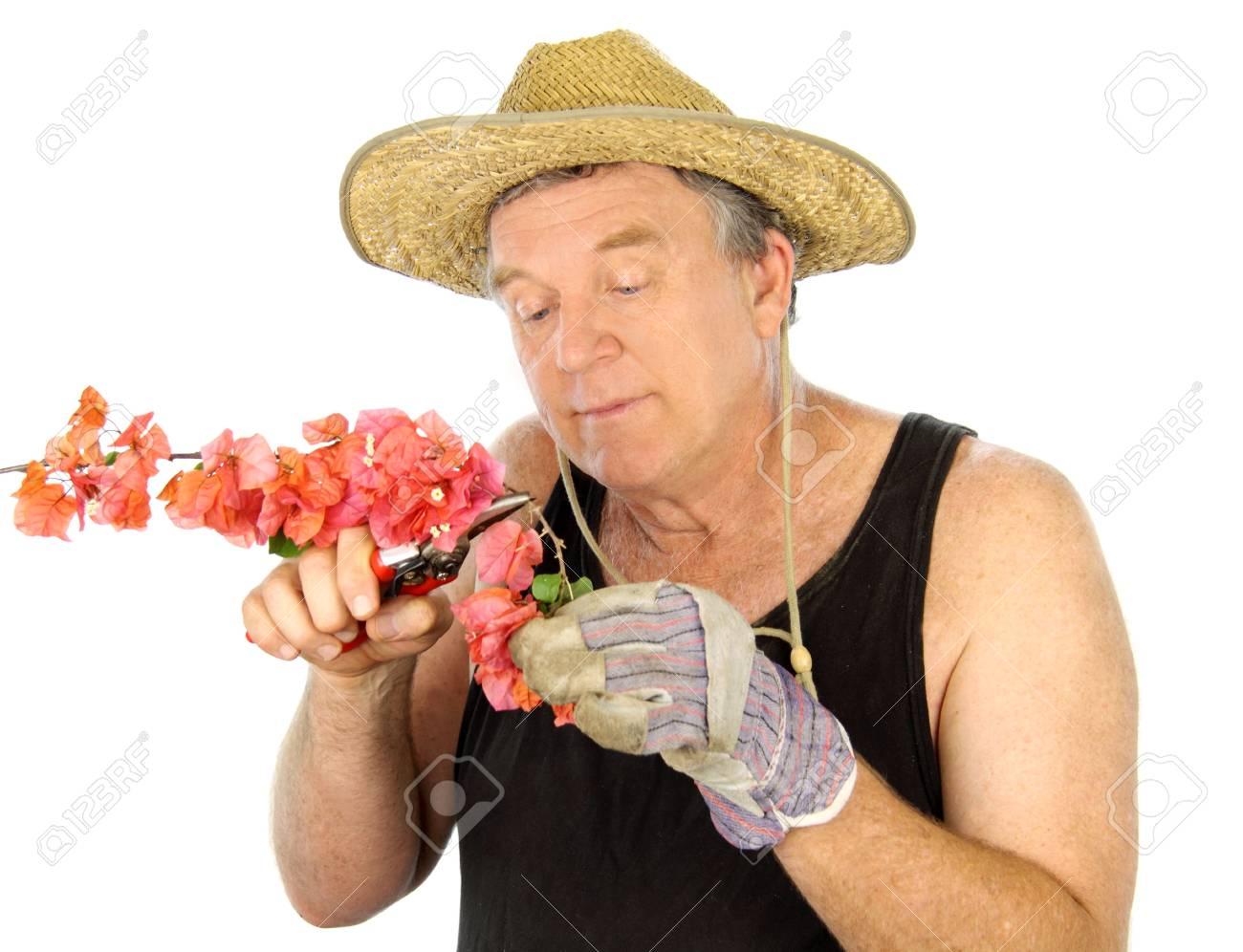 Middle aged gardener pruning a flowering bush. Stock Photo - 5946699