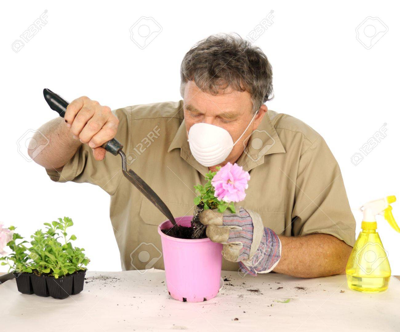 Middle aged nurseryman plants flower in potting soil with protective mask. Stock Photo - 6989789