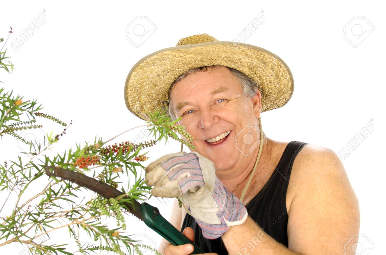 Middle aged gardener pruning a shrub with a garden saw. Stock Photo - 7354257
