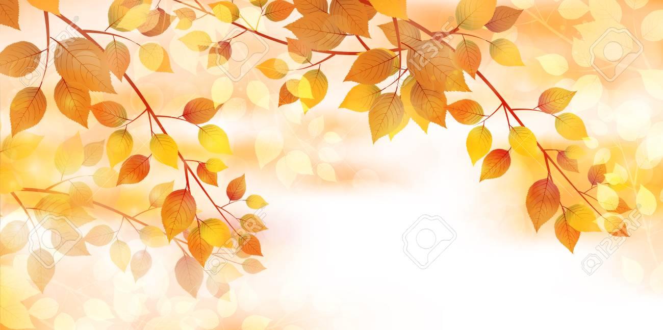 Autumn leaves autumn landscape background - 60443554
