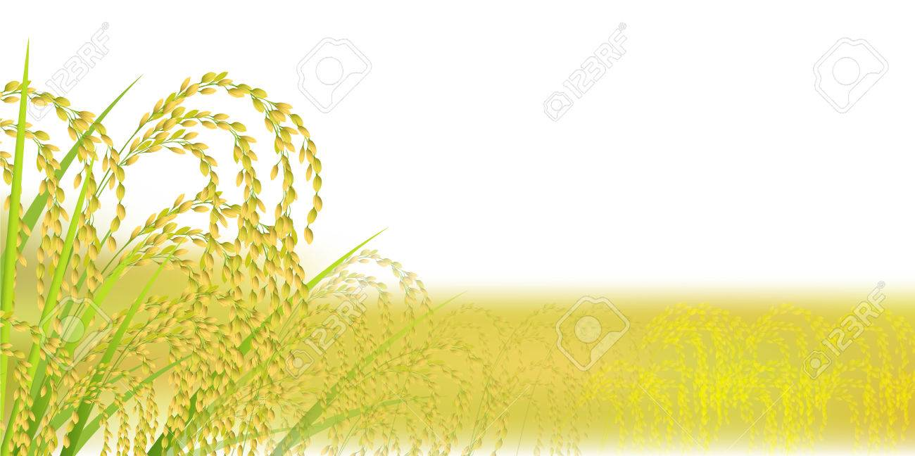 Rice autumn landscape background - 81318571