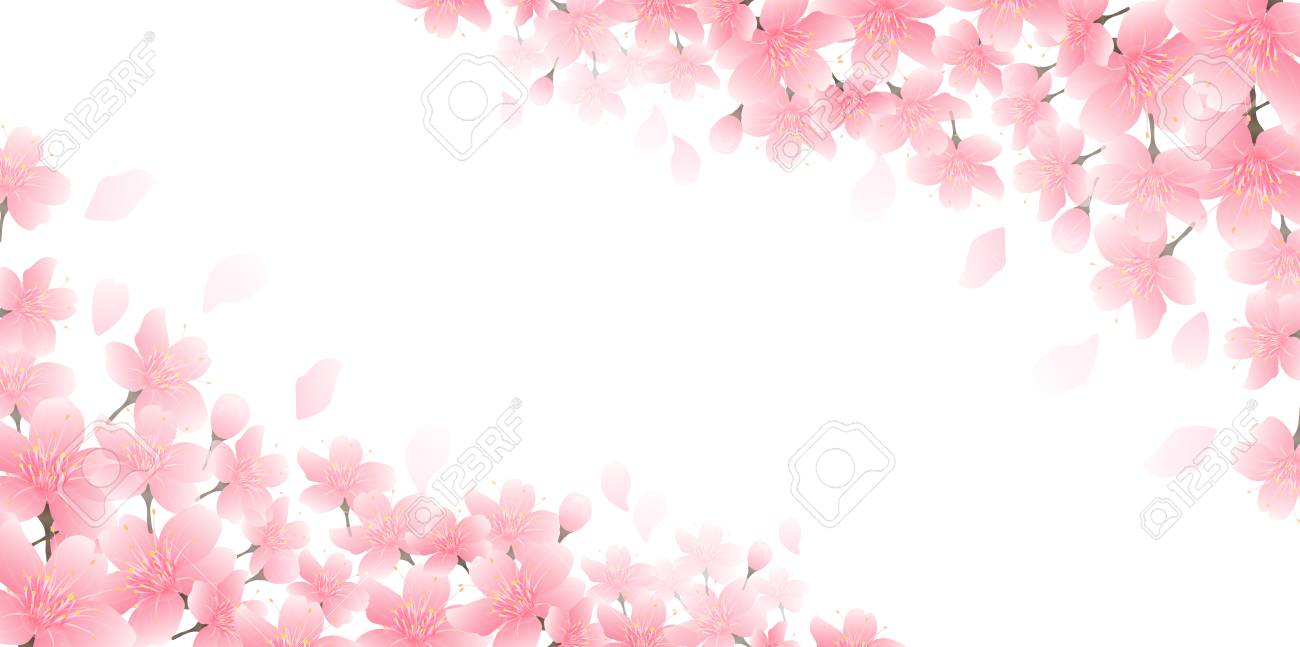 Cherry blossom spring flower background - 119404650