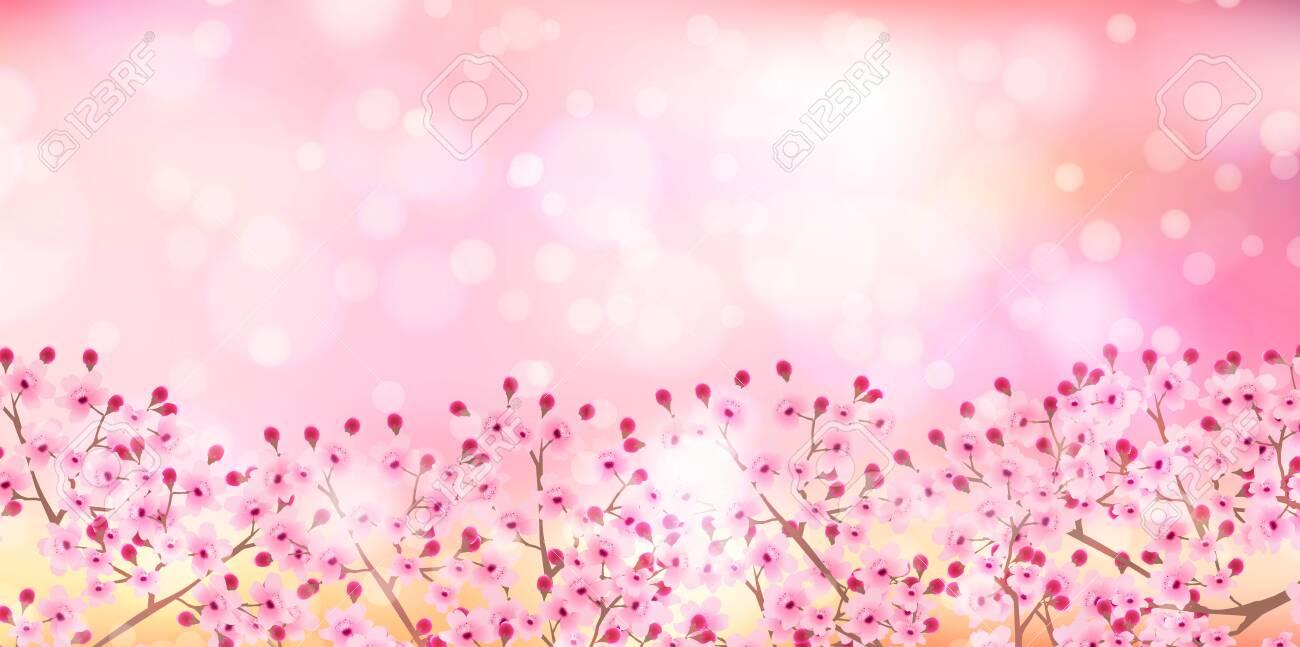 Cherry blossom Spring flowers background - 141247318
