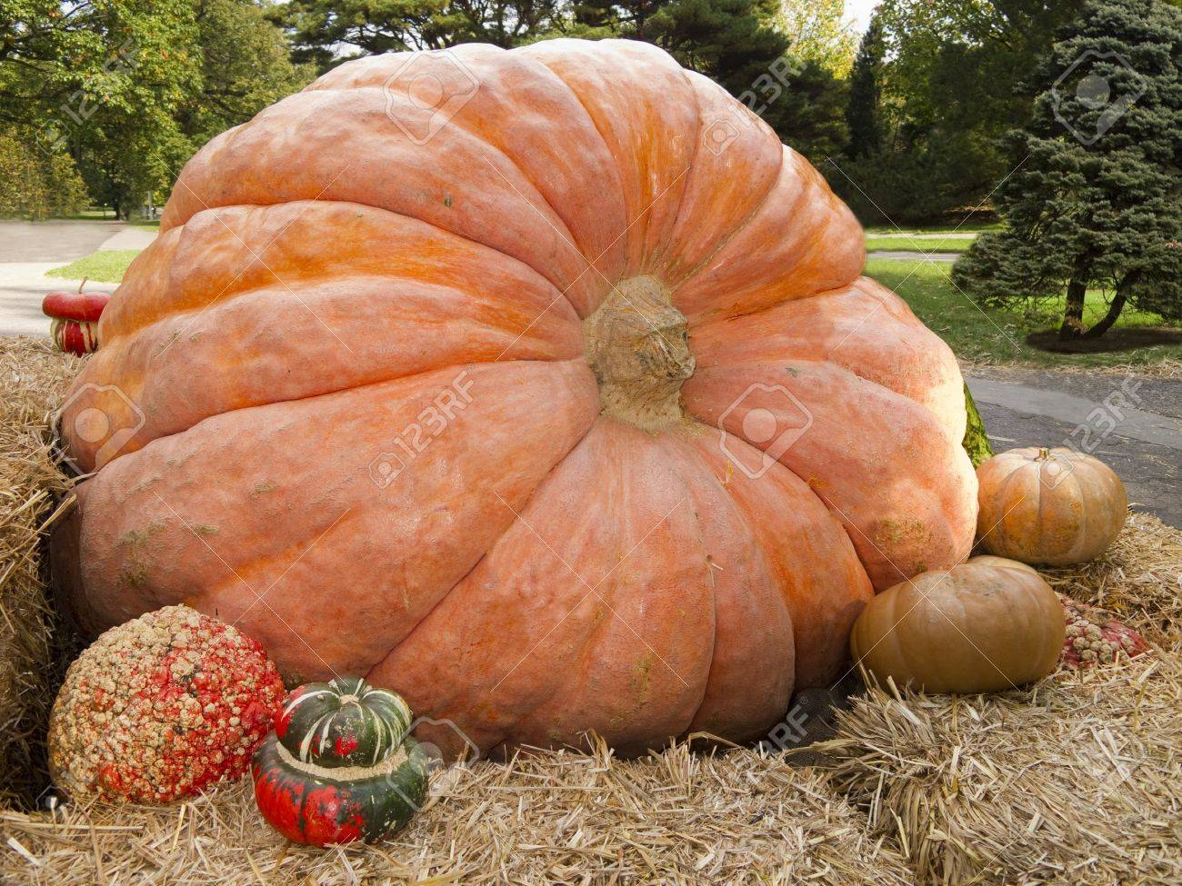 Giant pumpkin display with gourds surrounding it Stock Photo - 11961328