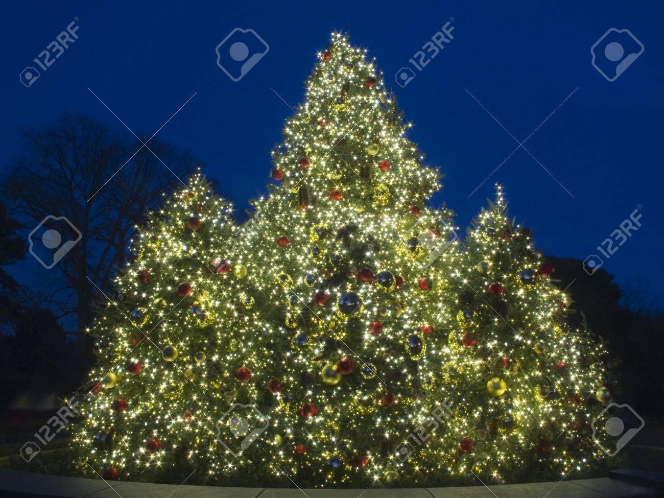 Outdoor Christmas Tree at Dusk, lit with bright colorful lights Stock Photo - 12628827