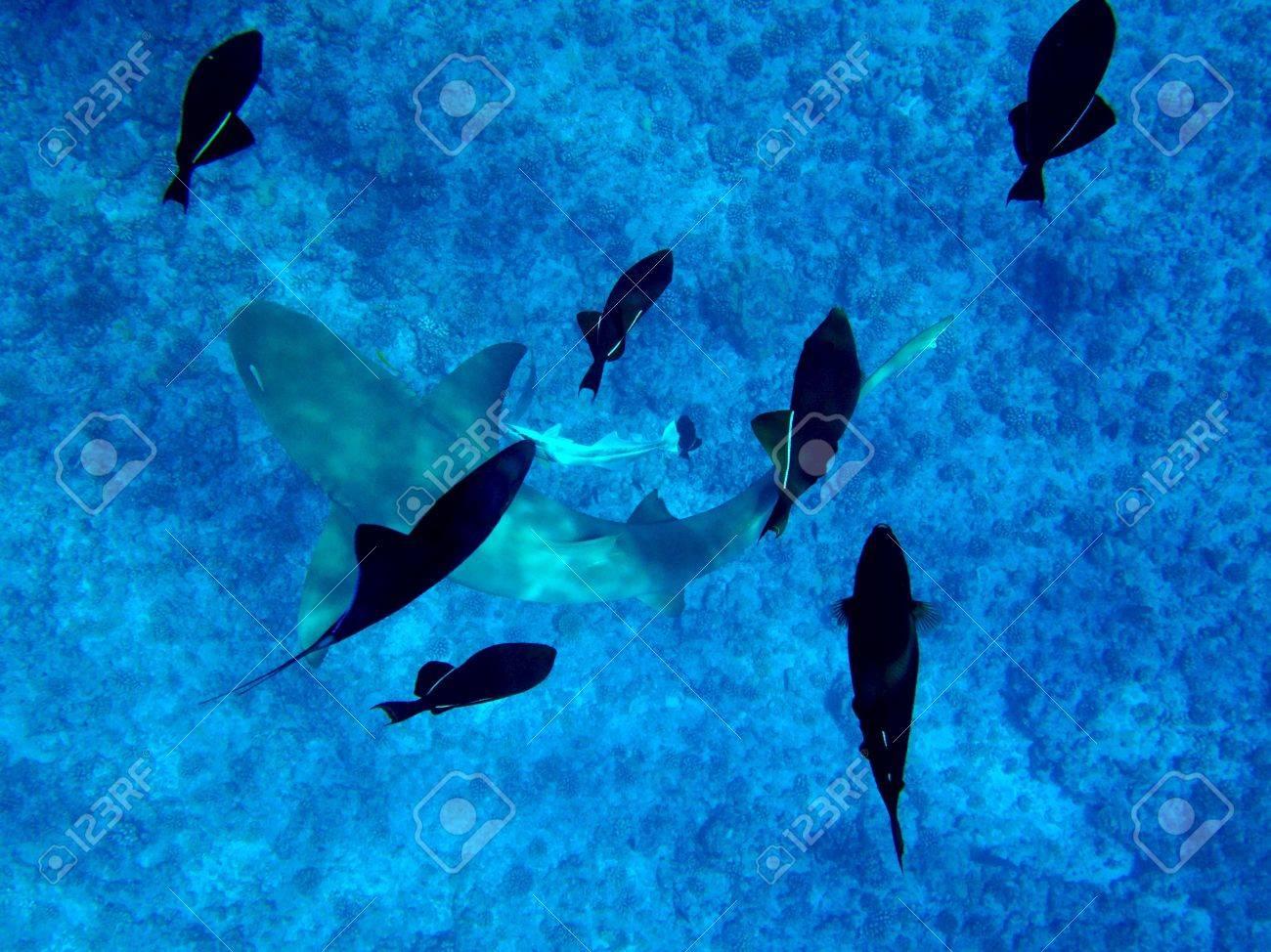 Shark and fish swimming in underwater Stock Photo - 38971822