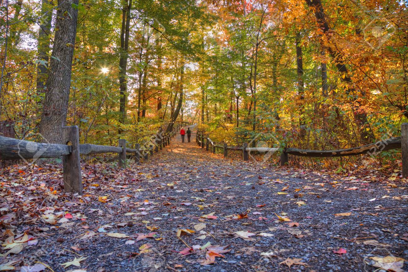 Forest Trail in Autumn. Fall foliage colors Stock Photo - 48202532