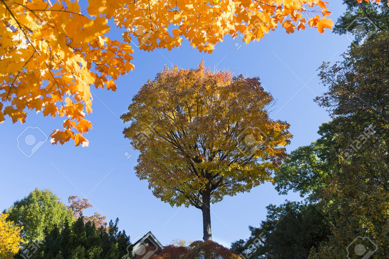 Isolated trees in shadow framed with yellow autumn leaves at the top Stock Photo - 49114598