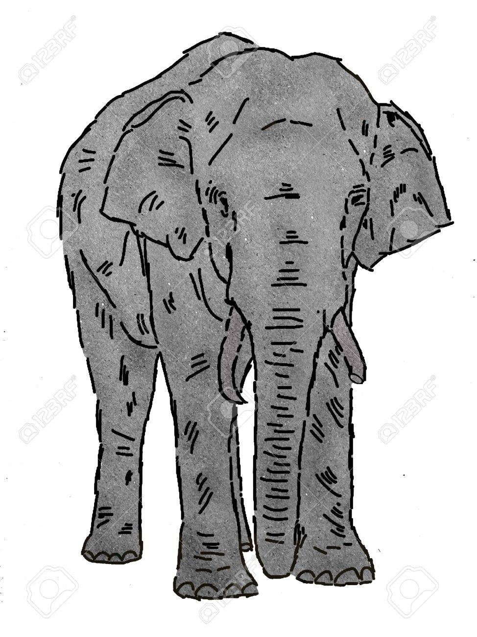 drawing of elephant on paper texture stock photo picture and