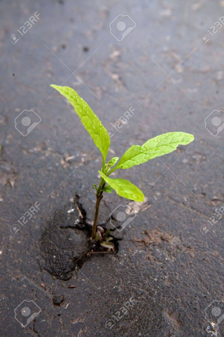 Young sprout makes the way through asphalt on city road. Stock Photo - 5787688
