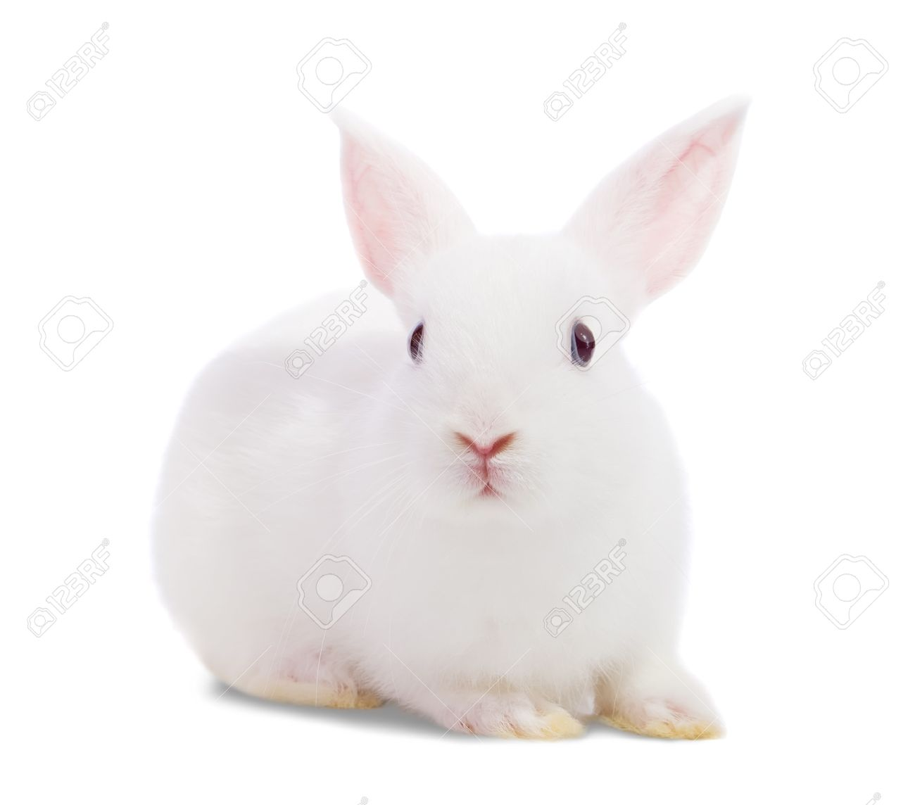 Little white rabbit. Isolated on white background Stock Photo - 7881623