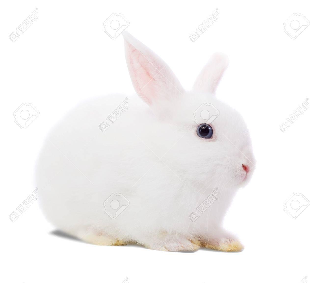 Little white rabbit. Isolated on white background Stock Photo - 8000567