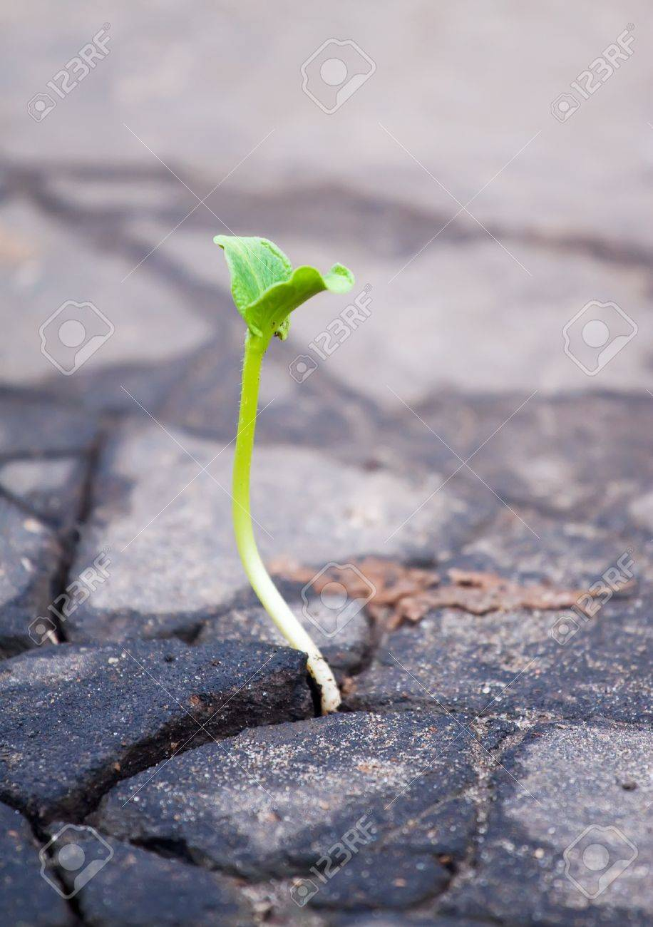 Young sprout makes the way through asphalt on city road Stock Photo - 8333993