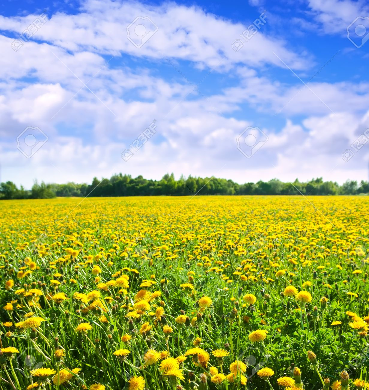 Summer landscape with dandelions meadow in sunny summer day Stock Photo - 9854954