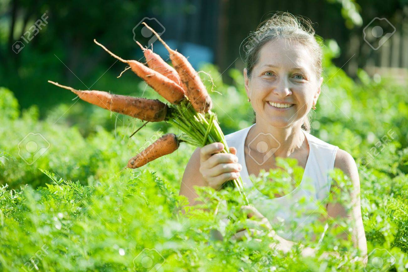 Mature woman  picking carrot in plant Stock Photo - 10333857